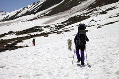 Two hikers and dog in snowy mountains at spring Royalty Free Stock Photo