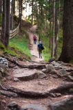 Two hikers on a mountain trail. Two hikers walking on a mountain trail with big tree roots and rocks in the foreground Royalty Free Stock Photos