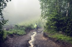 Two hikers on a path throught the forest in the mountains. In rainy foggy day. Back view of two hikers man and teenager with backpacks walking on forest trail Royalty Free Stock Photo
