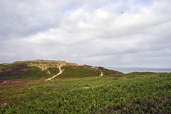 Two hiking paths winding over dunes and through brush towards the pacific ocean. Hiking at the California coast near Monterey, CA towards the Pacific Ocean in royalty free stock photos