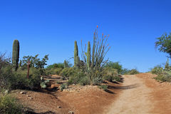 Two Hiking Trails in Bear Canyon, Tucson, AZ. Two hiking trails in Bear Canyon in Sabino Recreation Area Park in the Sonoran Desert along the Santa Catalina stock photo
