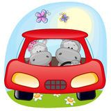 Two Hippos in a car Stock Image