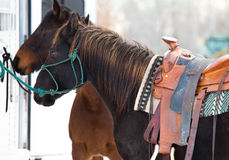 Two hitched horses Stock Photography