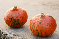 Two hokkaido pumpkins on concrete background Stock Images