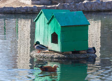 Two home for waterfowl Stock Images