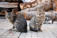 Two homeless brothers cats Royalty Free Stock Image