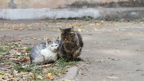 Two homeless cat sitting on the street stock video footage