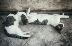 Two homeless cats. Stock Photo