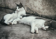 Two homeless cats. Royalty Free Stock Photo