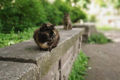 Two homeless cats sitting on stone in summer park Stock Photography