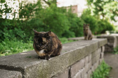Two homeless cats sitting on stone in summer park Stock Photos
