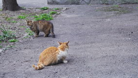 Two Homeless Cats on the Street stock video footage