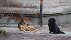 Two homeless dog sitting stock footage
