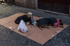 Two homeless dog on the street. Wait for money stock photos