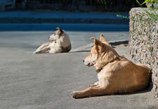 Two homeless dogs Royalty Free Stock Image