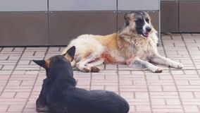Two Homeless Dogs resting on the street surface. Dogs lying on the pavement in shadow.  stock video