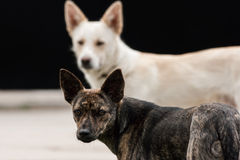 Two homeless dogs stock images
