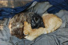 Two homeless kittens ginger and dark brown sleep as Ying yang sign royalty free stock photography