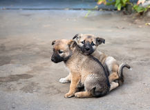 Two homeless puppies Stock Image