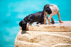Two homeless puppy on the beach Stock Images