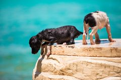 Two homeless puppy on the beach Royalty Free Stock Image