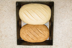 Two homemade bread rolls lie on a baking sheet. One black another white Stock Photography