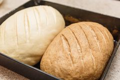 Two homemade bread rolls lie on a baking sheet. One black another white Royalty Free Stock Photo