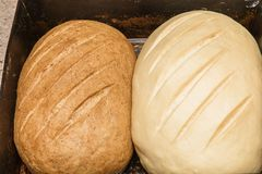 Two homemade bread rolls lie on a baking sheet. One black another white Royalty Free Stock Image