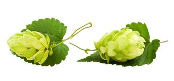 Two hops Royalty Free Stock Image