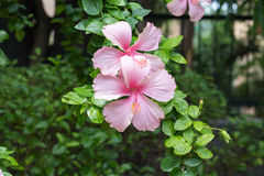Two Horizontal Color Flower royalty free stock photography