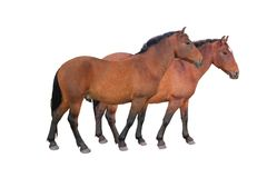 Two horse Royalty Free Stock Photography