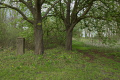 Two horse chestnut trees and a concrete pillar Stock Images