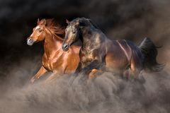 Two horse in desert storm. Two horse run gallop with dark background behind royalty free stock photo