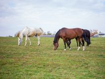 Two Horse in the field, Country autumn landscape royalty free stock image