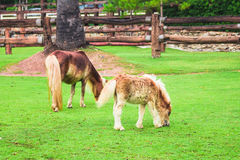 Two horse on field Royalty Free Stock Photos
