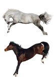 Two horse fun Royalty Free Stock Photos