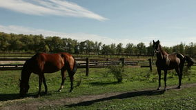 Two horse stock video footage