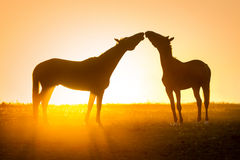 Two horse in love Royalty Free Stock Photos