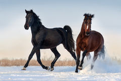 Two horse run Royalty Free Stock Images
