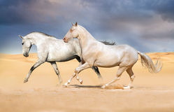 Two horse run gallop Stock Photography