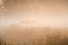 Two horse silhouette in dense fog Stock Images
