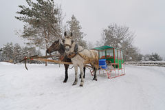 Two-horse Sleigh (Zanka-2). Sleigh drawn by a pair of horses, two-horse sleigh Royalty Free Stock Photography
