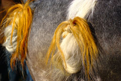 Two Horse Tails Royalty Free Stock Images