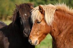 Free Two Horses Stock Photos - 132812743