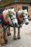 Two horses. Two horses in a touristic center Stock Photography