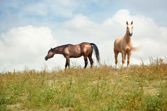 Two horses Stock Photo