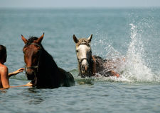 Free Two Horses Royalty Free Stock Photography - 2580367