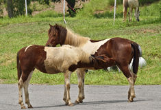 Two horses. On the road Royalty Free Stock Photos