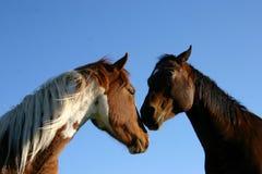 Free Two Horses Stock Image - 310341
