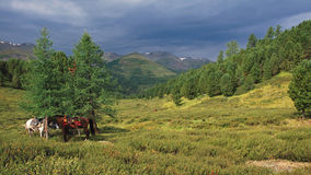 Two horses in Altai mountains Royalty Free Stock Images